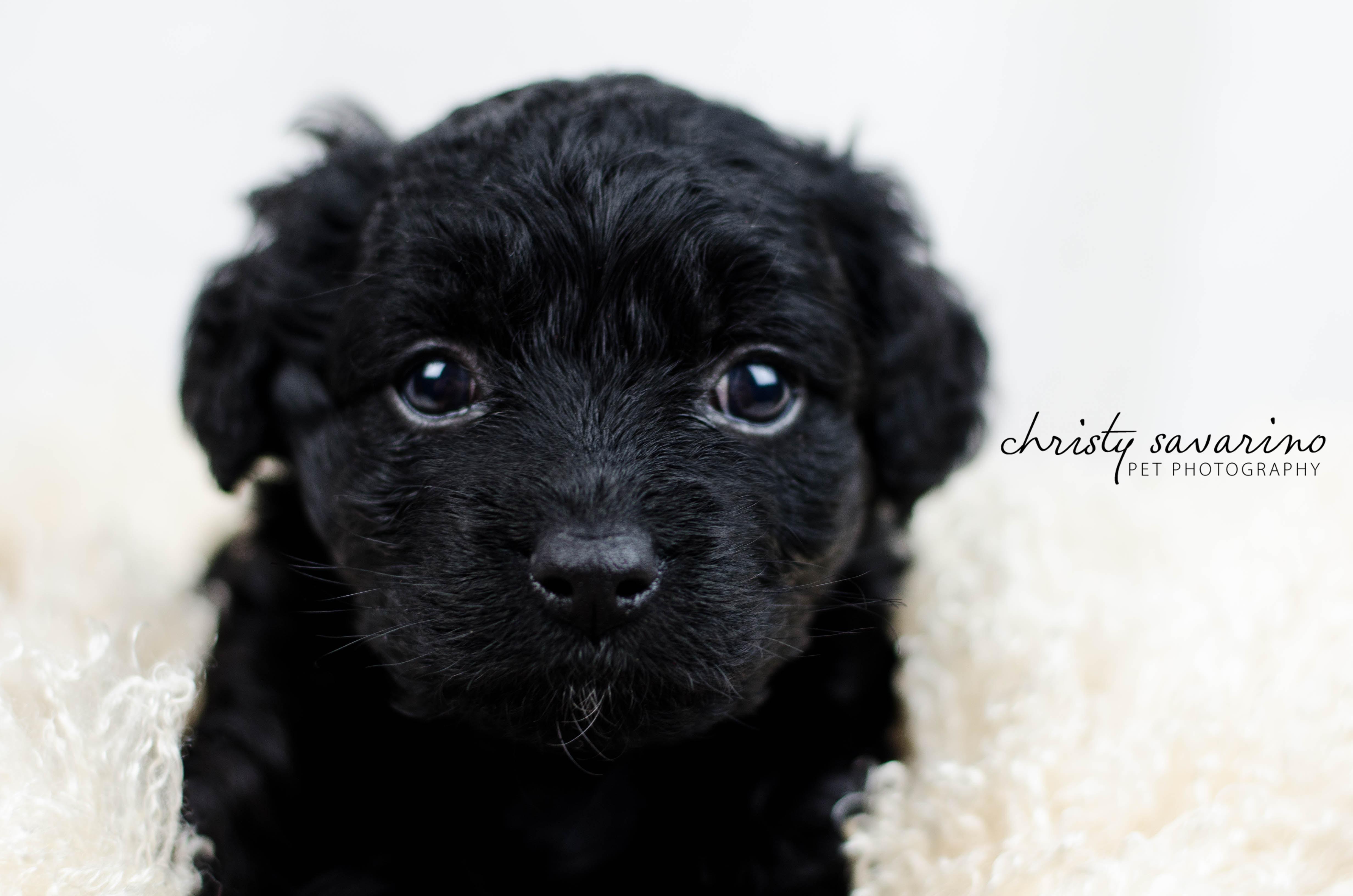 puppybasket3