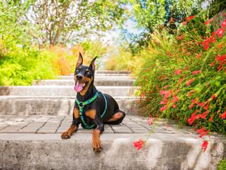 Dog Days Botanical Gardens