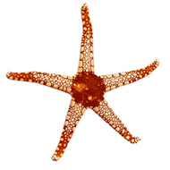 Starfish_real2.png