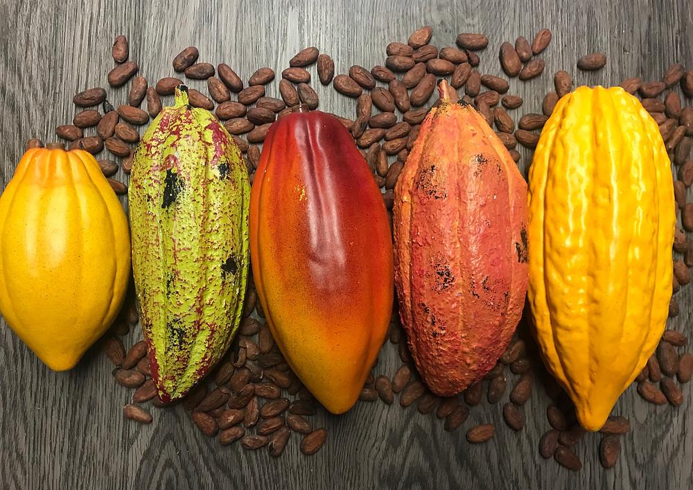 Fêves de cacao