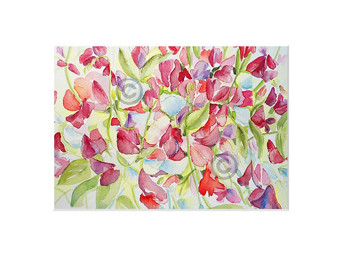 Pink Sweetpea print fits A4 frame with mount