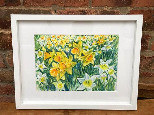 Original Watercolour Daffodils