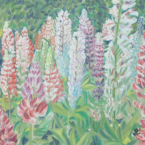 Pastel lupins card