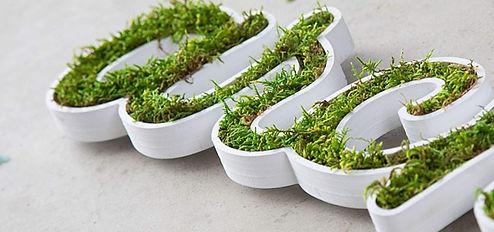 vegetal-11.jpg