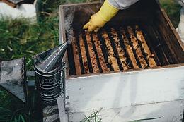 La Commingeoise produits fermiers BIO miel