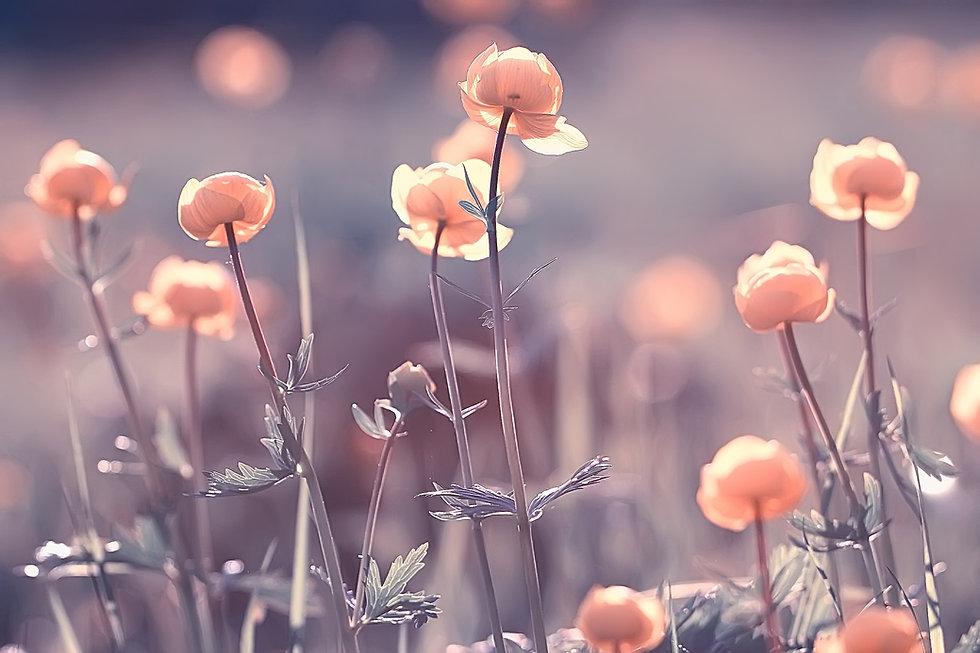 vintage background little flowers, natur