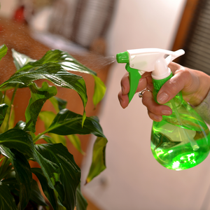 Woman misting a tropical plant with a green water sprayer