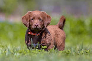 little-puppy-in-the-garden-PZGRUK4.jpg