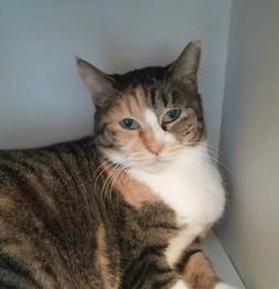FIV(猫免疫不全ウイルス感染症)でも、譲渡への希望をつなぎたい!