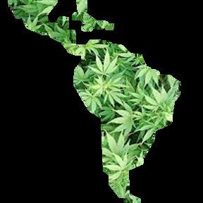 Latin America's Emerging Cannabis Market