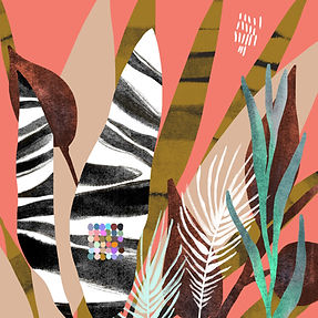 zebra plant.jpg
