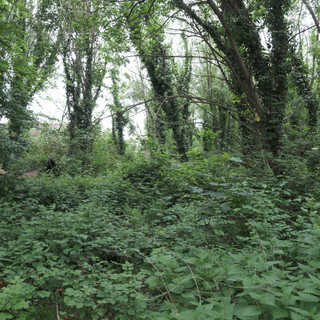 Wild forest in the centre of my home town