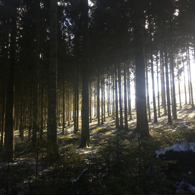 Forest in winter (Spa, Belgium)