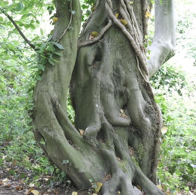 Tree on the GR5