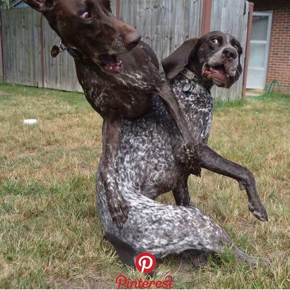Two dogs rambling around.
