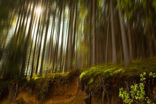 gozd01.jpg