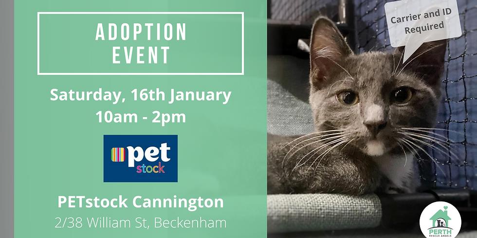 Cat & Kitten Adoption Day at PETstock Cannington | 16th January