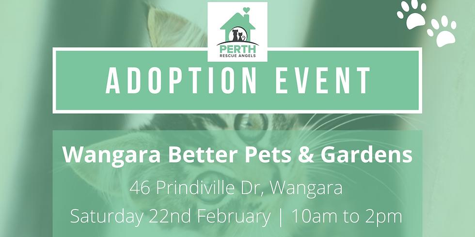 Cat & Kitten Adoption Day  - Wangara Better Pets & Gardens