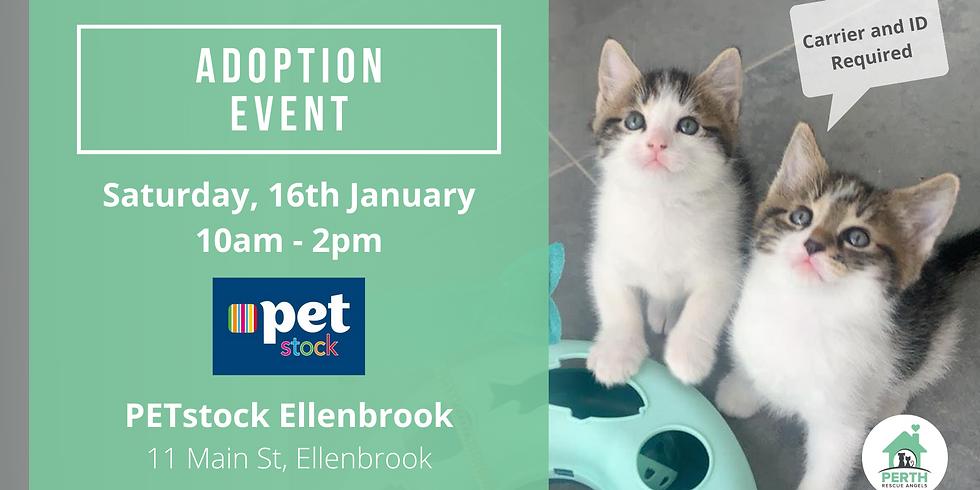 Cat & Kitten Adoption Day at PETstock Ellenbrook   16th January