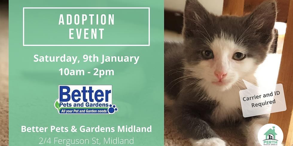 Cat & Kitten Adoption Day at PETstock Ellenbrook | 16th January (1)