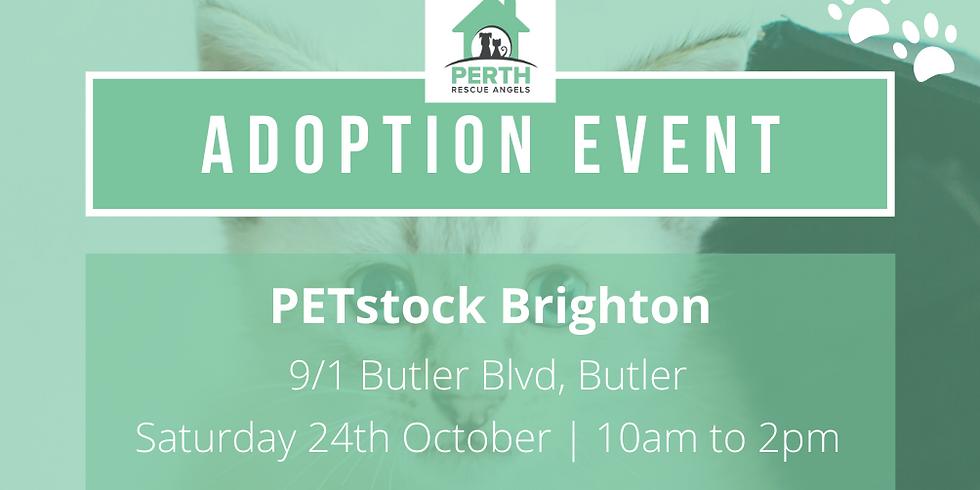 Cat & Kitten Adoption Day at PETstock Brighton | 24th October