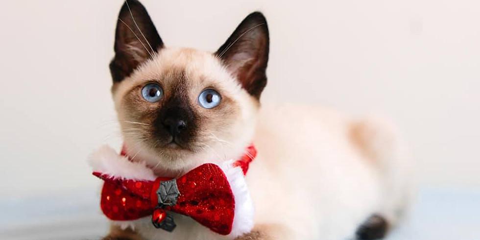 Cat & Kitten Adoption Day - Xmas Edition
