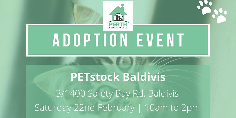 Cat & Kitten Adoption Day  - PETstock Baldivis