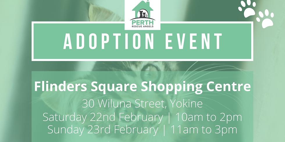 Cat & Kitten Adoption Day  - Flinders Square Shopping Centre