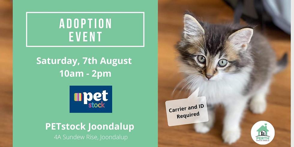 Cat & Kitten Adoption Day at PETstock Joondalup