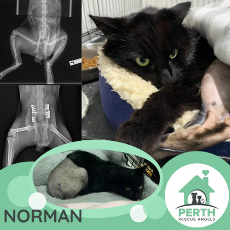 Can you please help give Norman a 'leg up'?