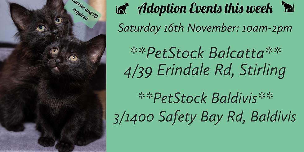 Cat & Kitten Adoption Day | 16th November
