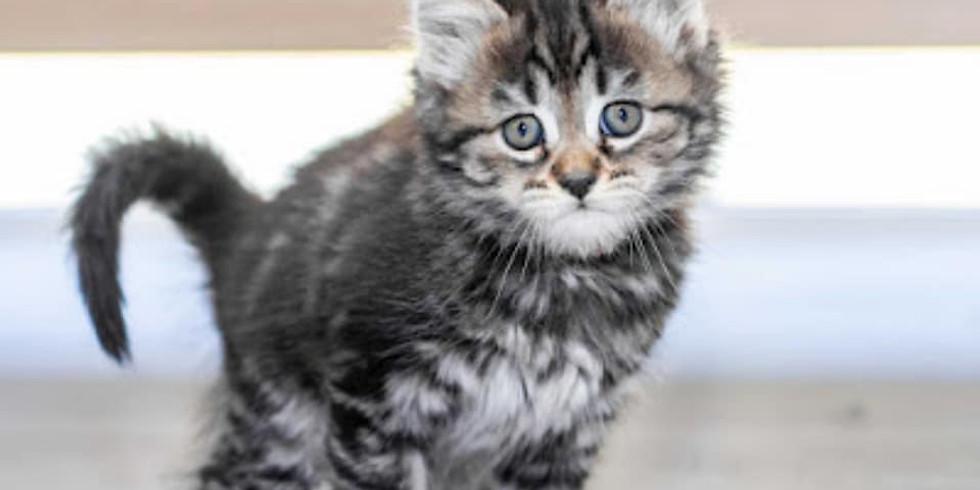 Cat & Kitten Adoption Day