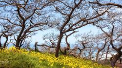 Torrey Pines, California