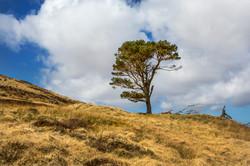 Single tree Scotland May 2016-7