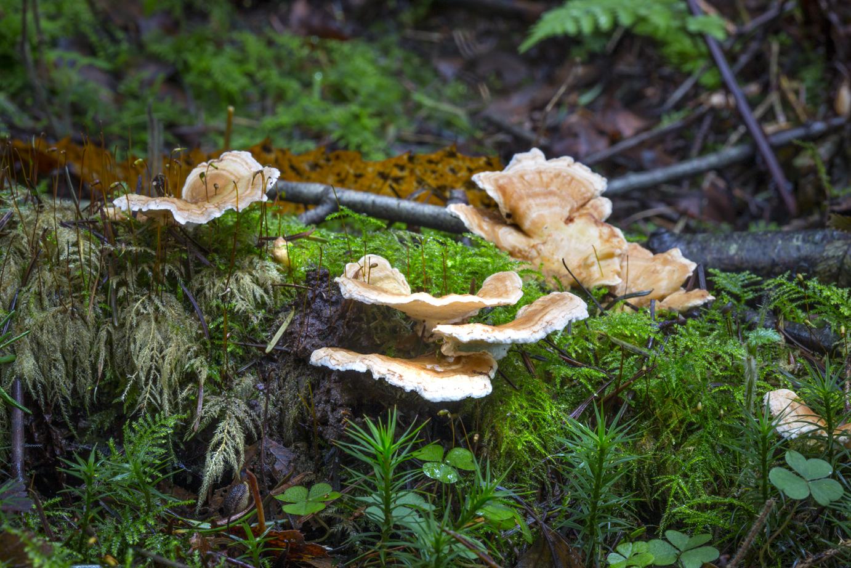 Mushroom 2018-22