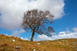 Single tree Scotland Apr 2016-1
