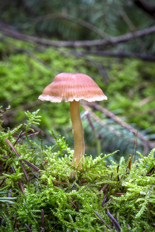 Mushroom 2018-3