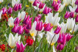 Flowers Hythe Apr 19-1