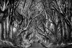 Dark Hedges-1c