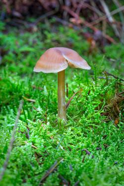 Mushroom 2018-10