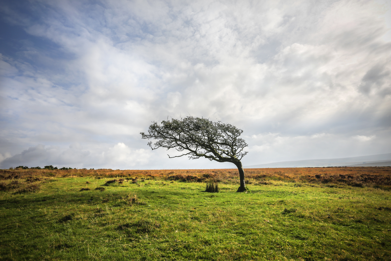 Tree Sept 2014-1