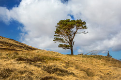 Single tree Scotland April 2016-7