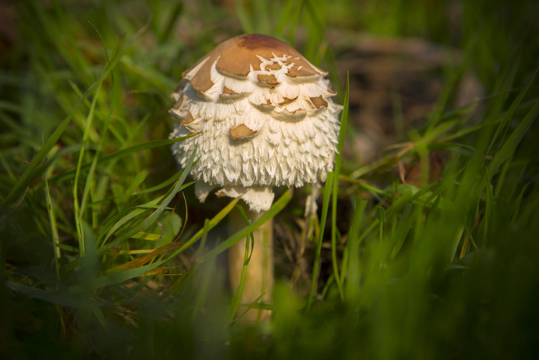 Mushroom-19a