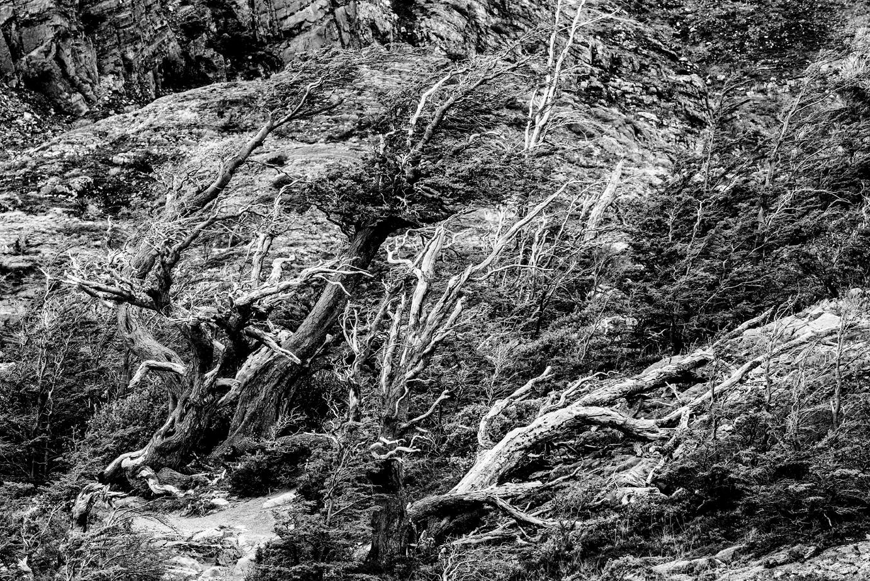 Trees-1a