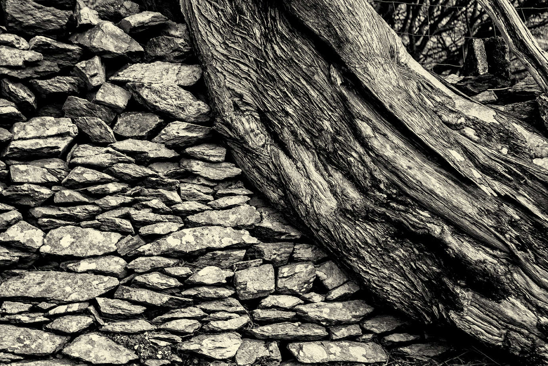 Old Trees-2b