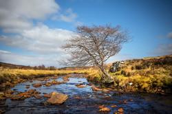 Single tree Scotland May 2016-5