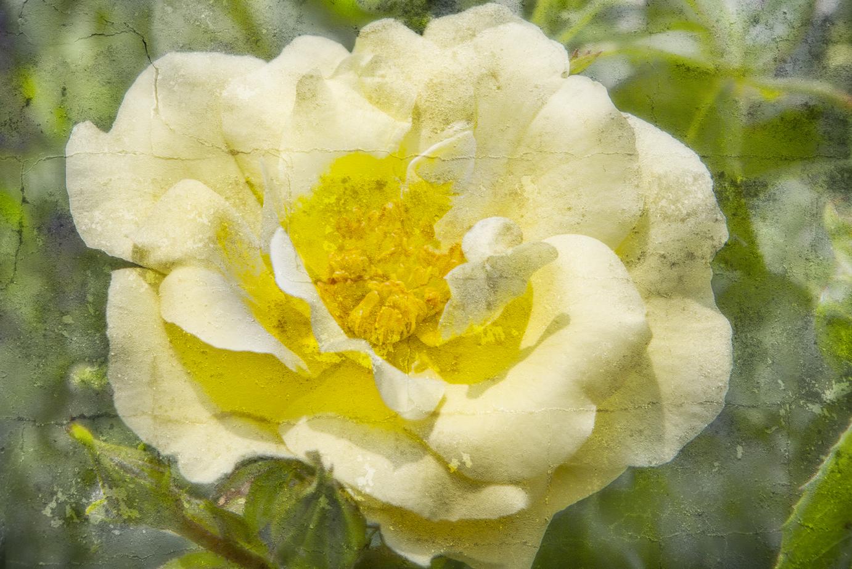 Yellow Flower-1b.jpg