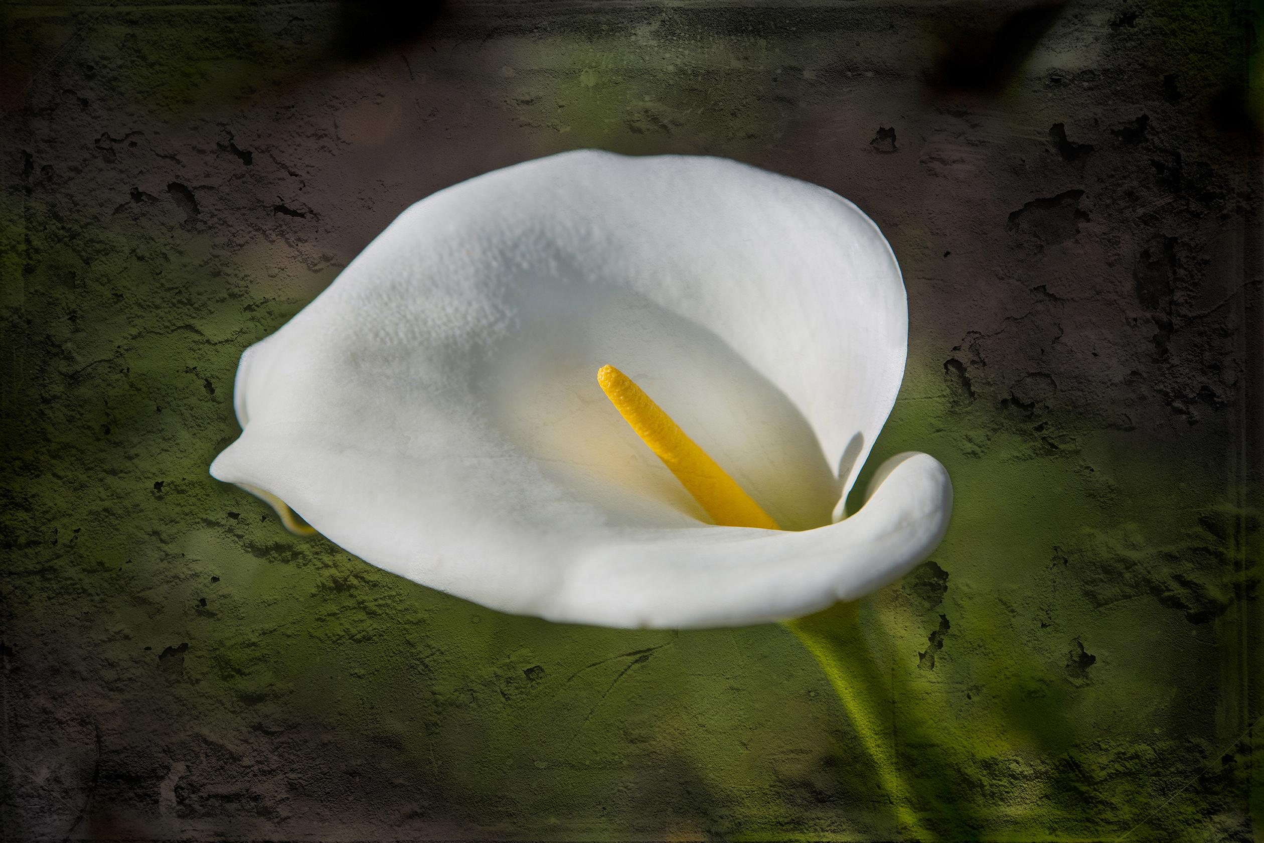 Puerto Varas flower-1b
