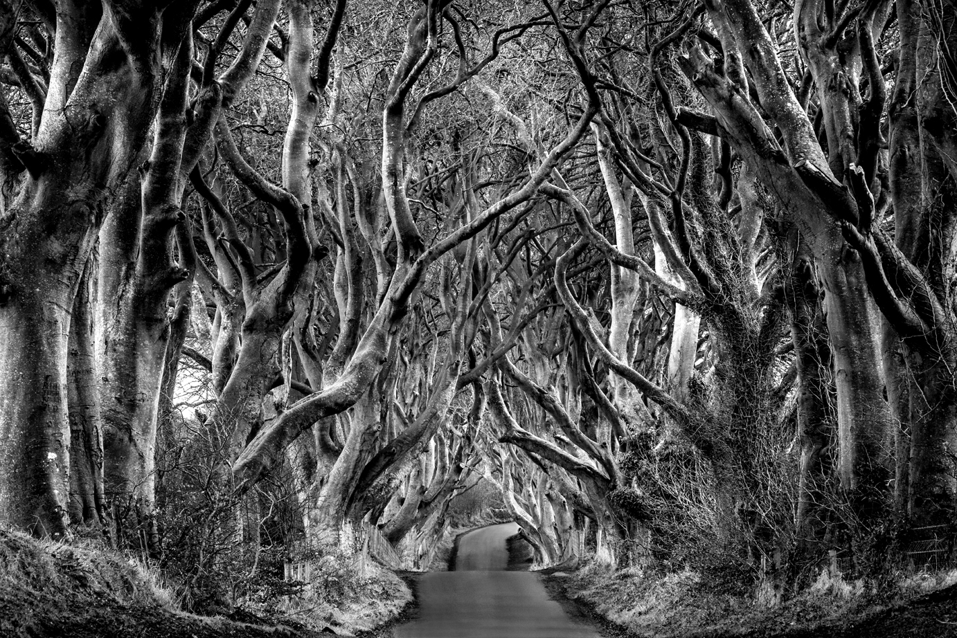 Dark Hedges-1c.jpg
