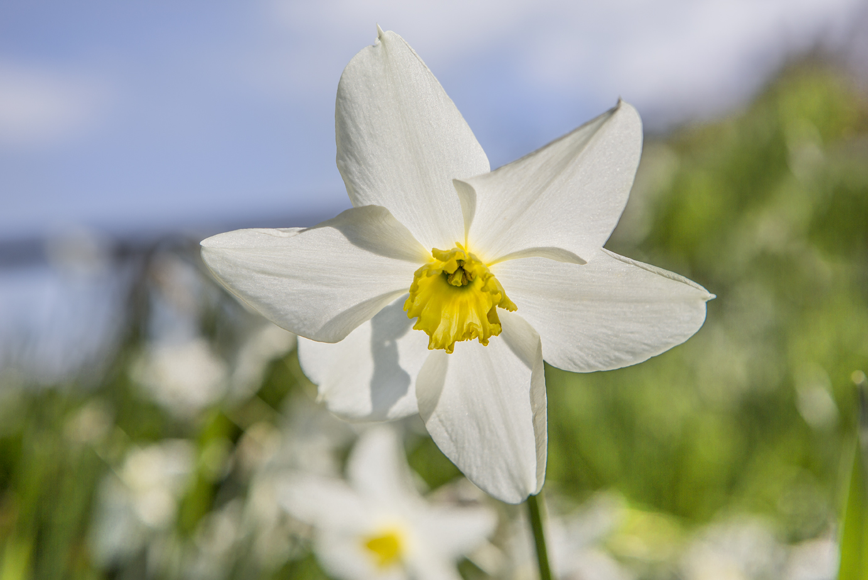 Flowers Hythe Apr 19-3